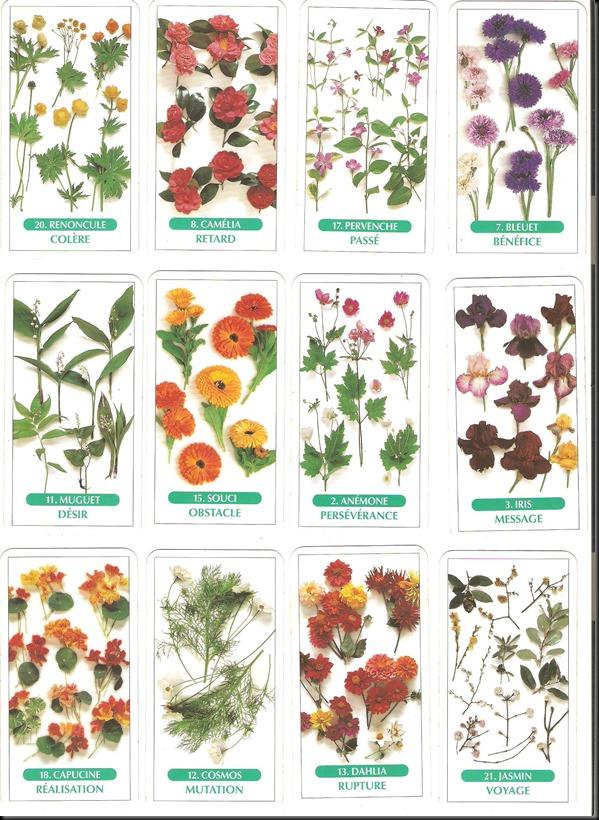 tarot des fleurs 1